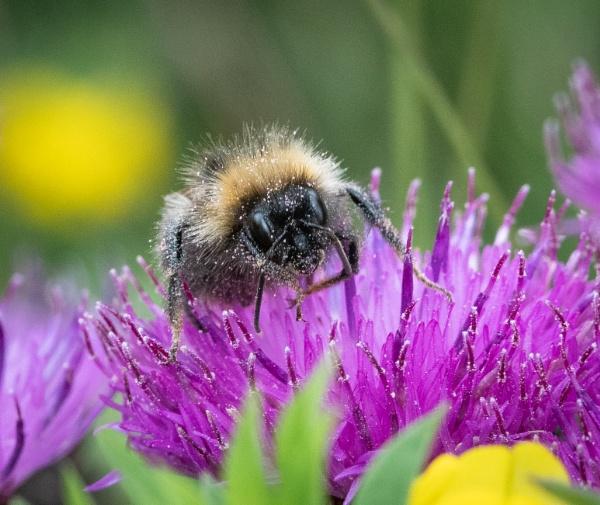 The Pollenator by jasonrwl