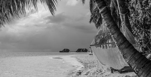 Paradise by mammarazzi