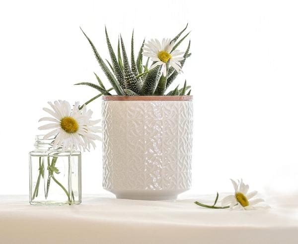 Flowers & Plants by Irishkate