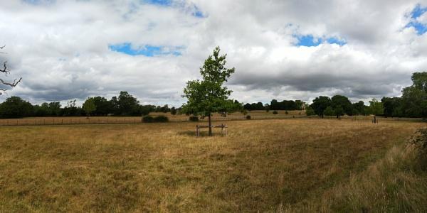 Lonely tree by diehard4