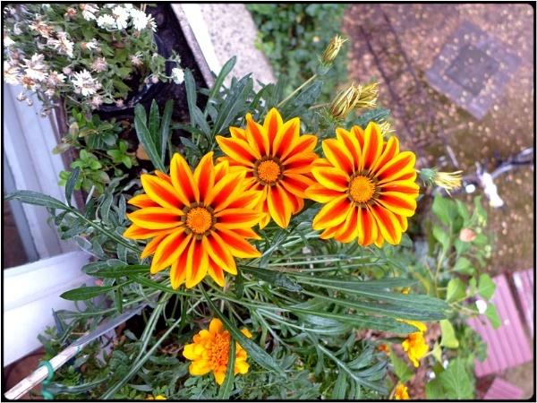 windowflowers by FabioKeiner