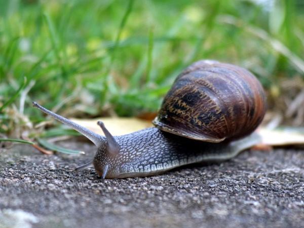 Snail by DerekHollis