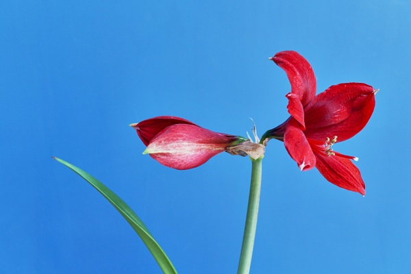 Lone flower by jimmoore1