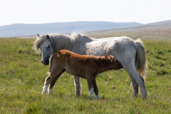 Mare and Foal by springfieldphotography