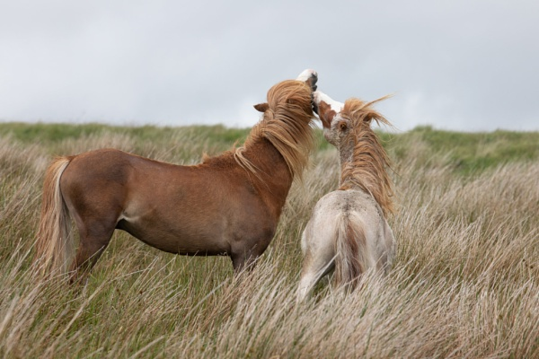 Horse play by springfieldphotography