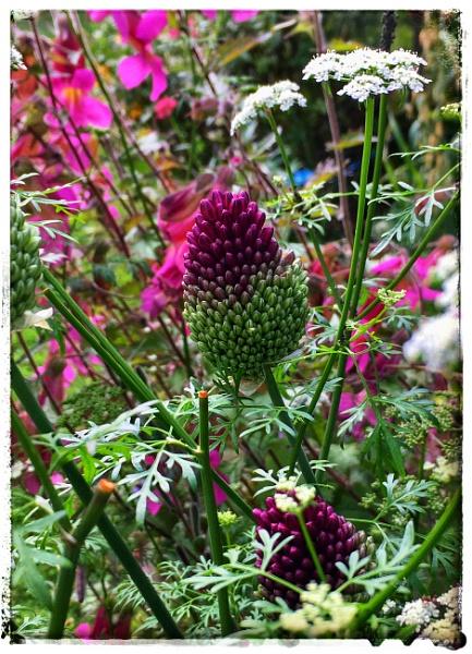 Purple by dukes_jewel