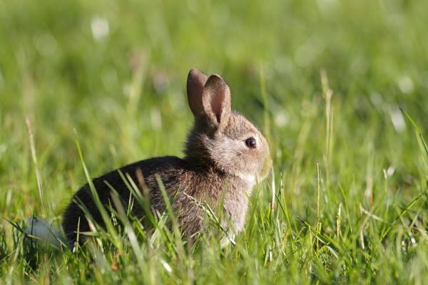 Rabbit by Philipwatson