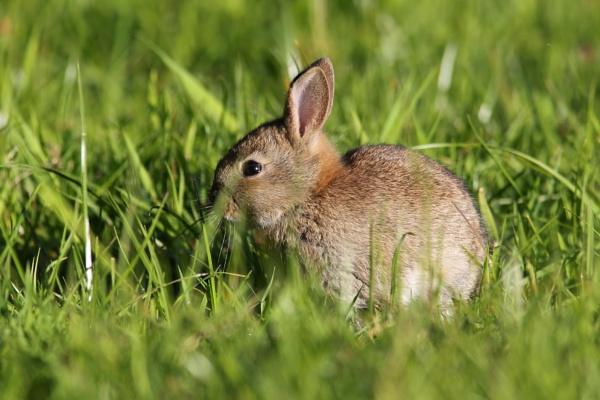 Rabbit 2 by Philipwatson