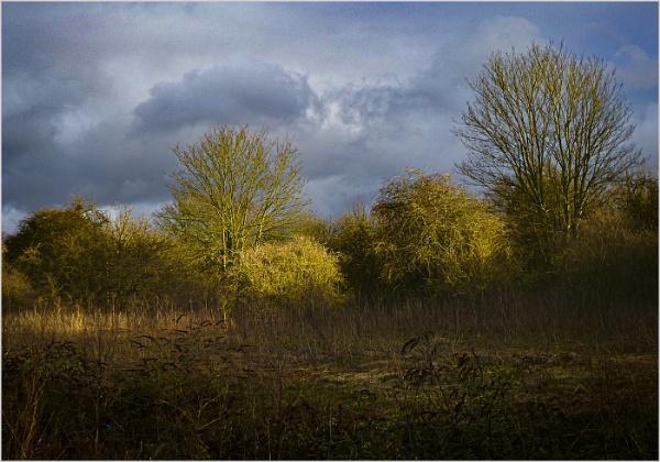 Woodland Storm Brewing by AlfieK