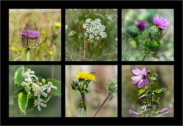Wild Flowers 1 by AlfieK