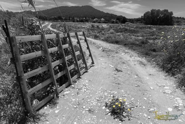 A road on Rhodes by IainHamer