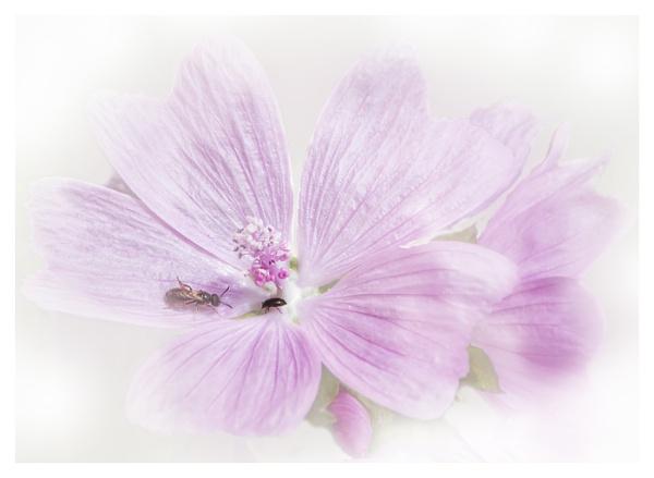 Wild Flower by MAK2