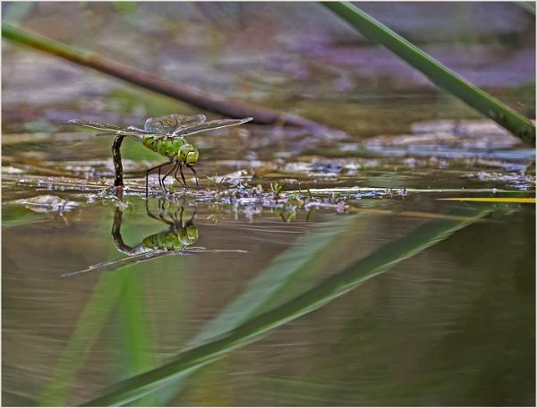 Pond Life by AnnetteK