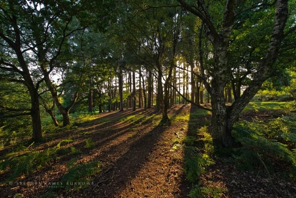 Rowton Bank Shadows by Stephen_B