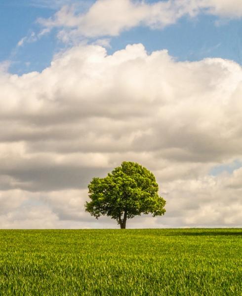 The Tree by mark2uk
