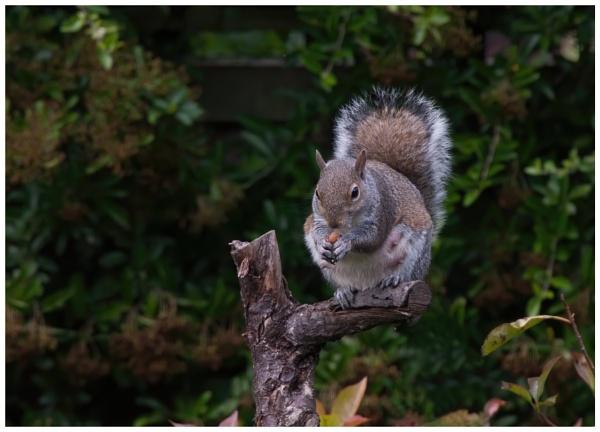 Peanut Thief by davidgibson