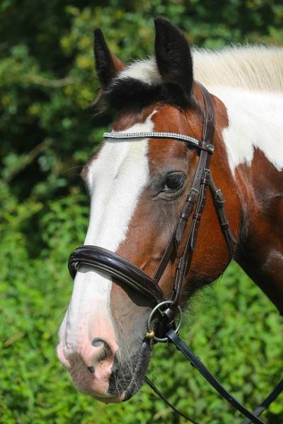 Horse by kelvin7