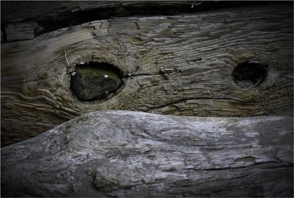 One Eyed Drifter by Daisymaye