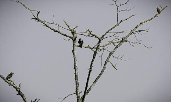 Three Birds in a Tree by Daisymaye