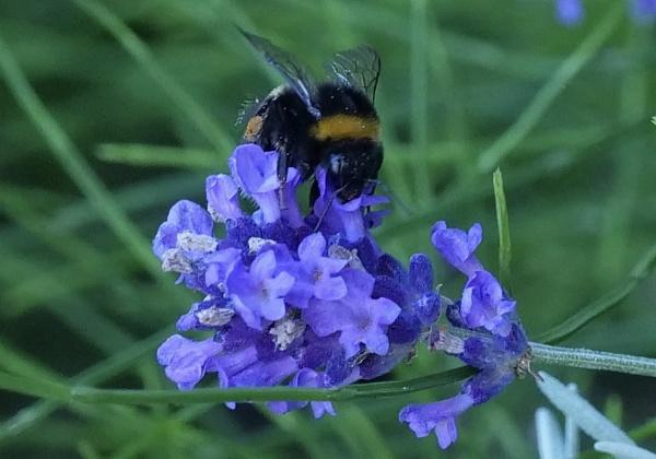buzz buzz buzz by sparrowhawk