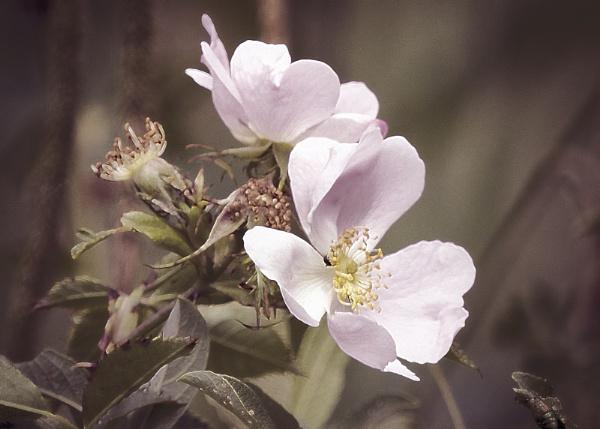 Flower - Have No Idea! by pauljt