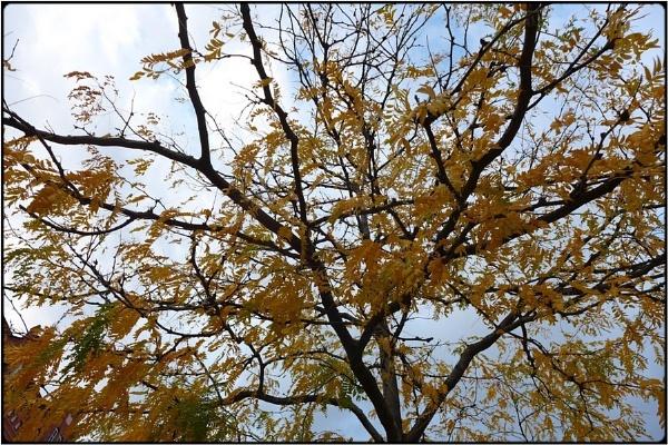 wind tree by FabioKeiner