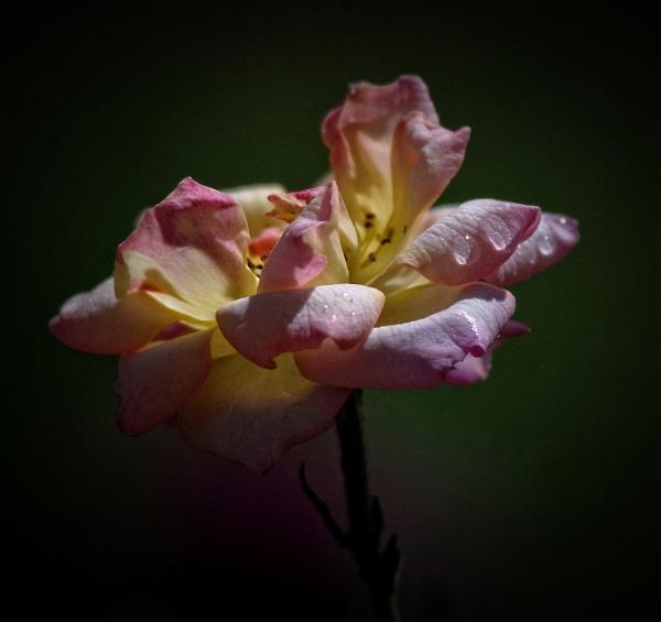 Sweet Dream...... by Mollycat