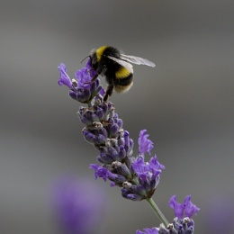 The nectar's in here somewhere!