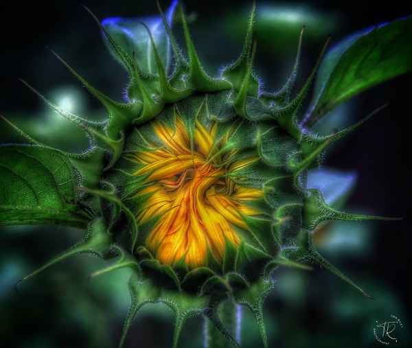 Waiting to open by tomriley
