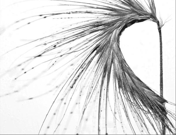 Wet Barley by Madoldie