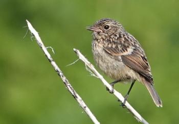 A bird on Exmoor