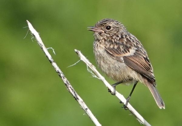 A bird on Exmoor by frogs123