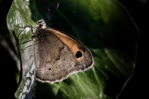 Butterfly - Fine Art by TornadoTys