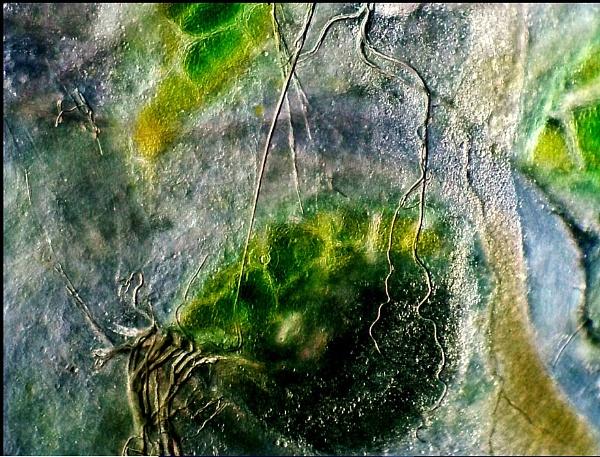 A Caterpillar\'s Body by DonSchaeffer