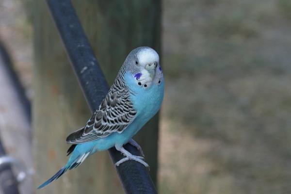 Birds by GGAB