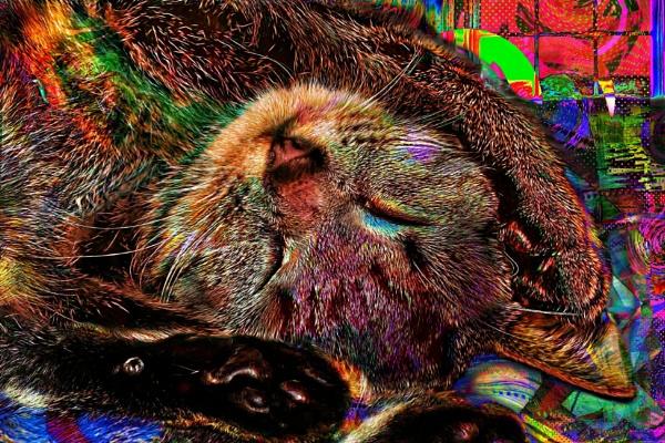 Crazy Catnip Dreams. by Tooma