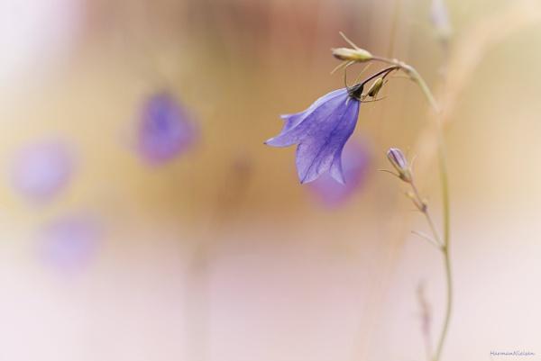 Tender Blues by HarmanNielsen