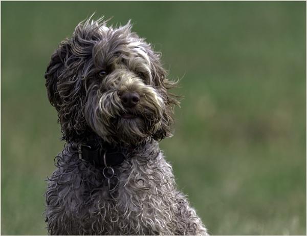 Doggie Daydreamer by AnnetteK