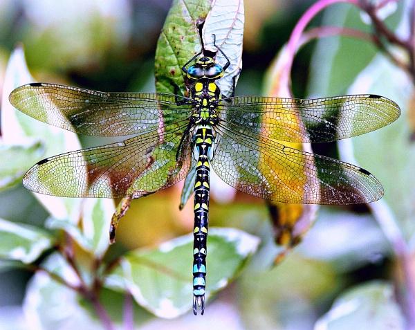 Gossamer Wings by niknakpaddywhack