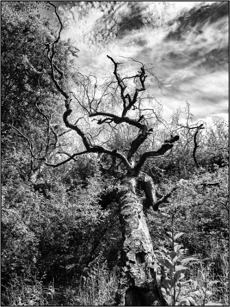 Taken in Isolation 60 by woolybill1