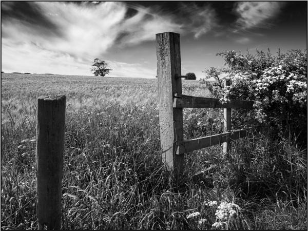 Taken in Isolation 61 by woolybill1