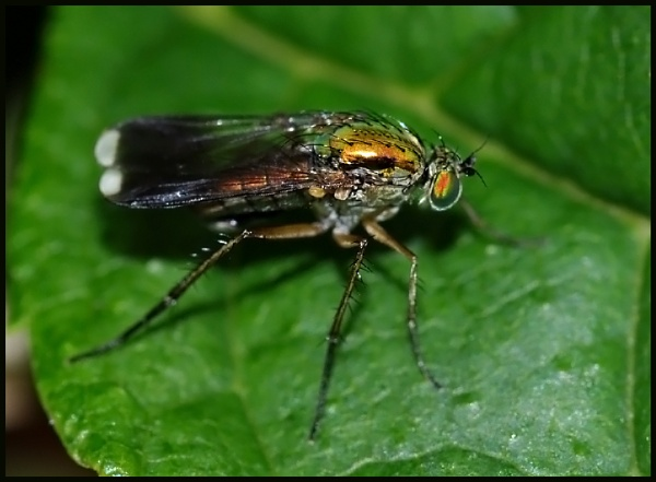 Assassin Fly  # by Badgerfred
