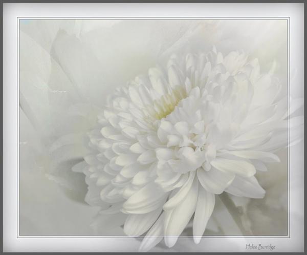 White by helenlinda