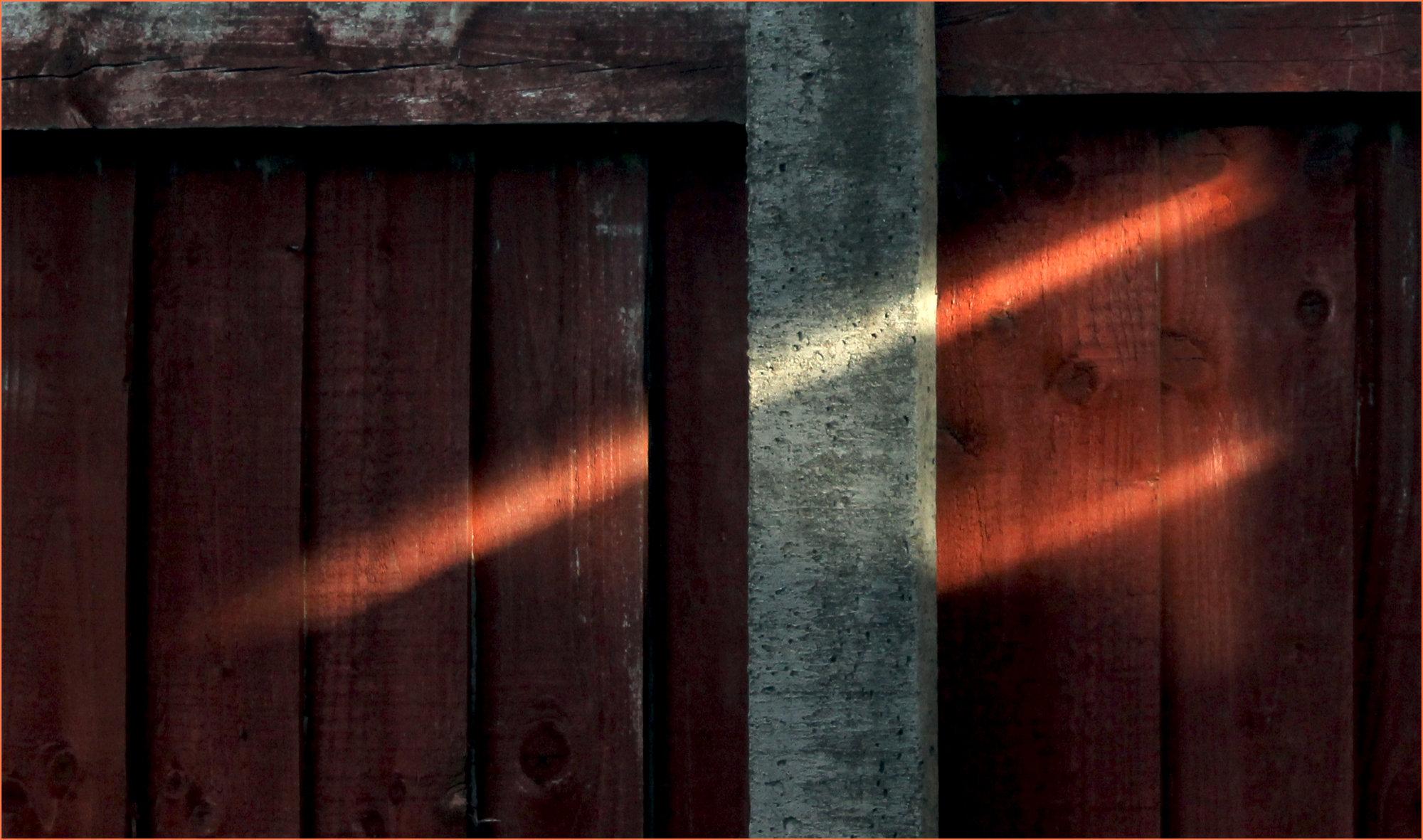 Last light on the garden fence