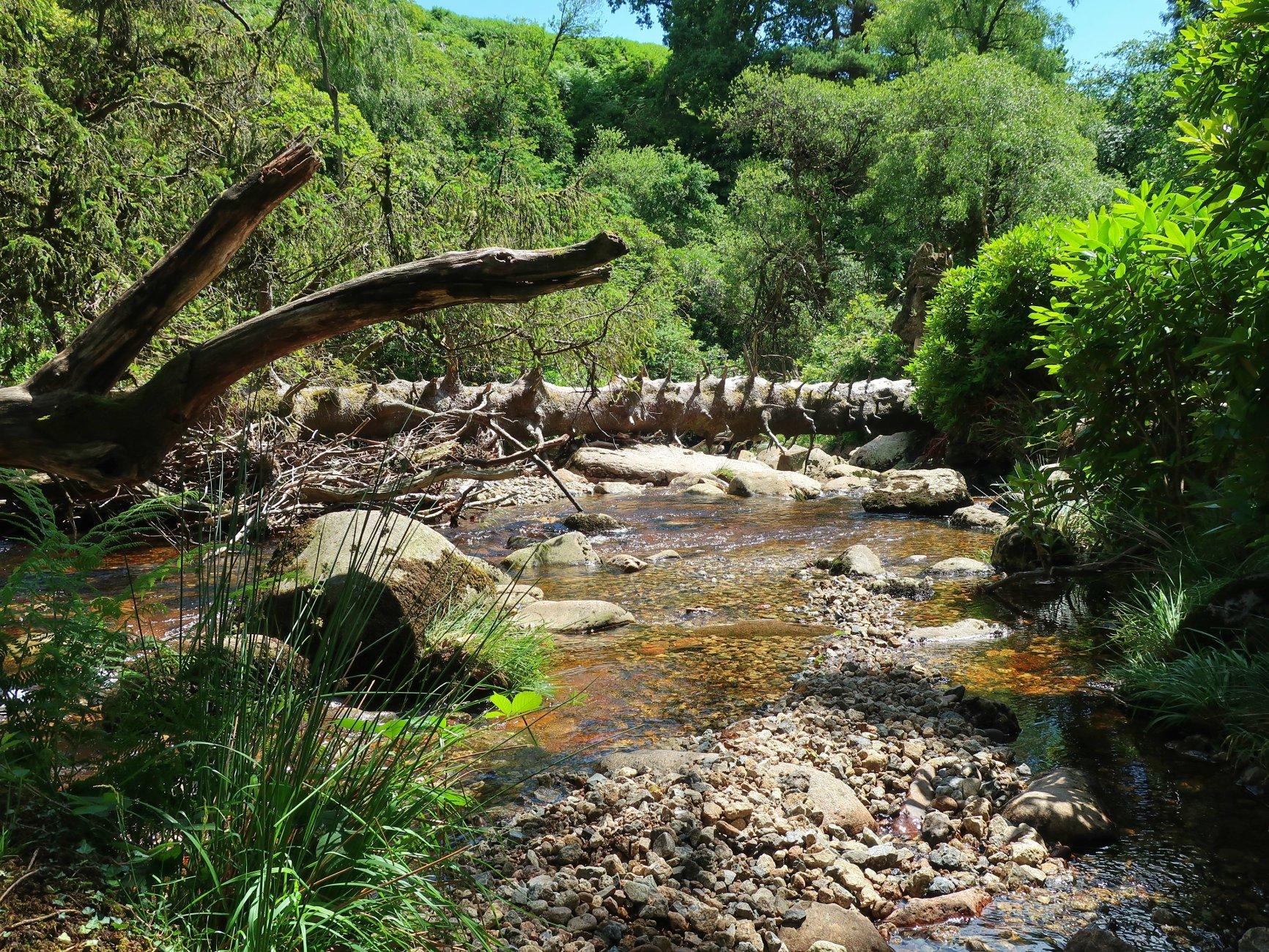 River Avon, below Avon Dam
