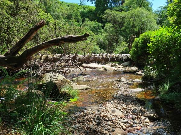 River Avon, below Avon Dam by mitchellhatpeg