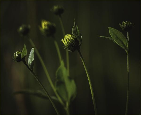 Wild and Pretty by Daisymaye
