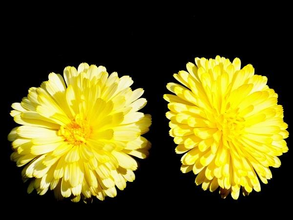 Twins by ianmoorcroft