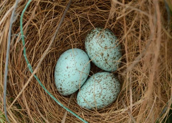 Egg by prabhuv