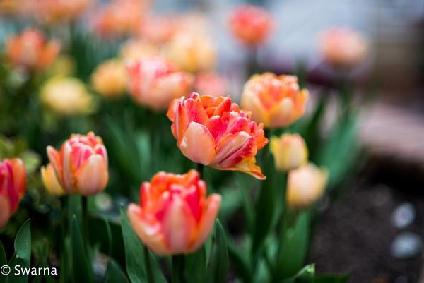Floral V ... by Swarnadip